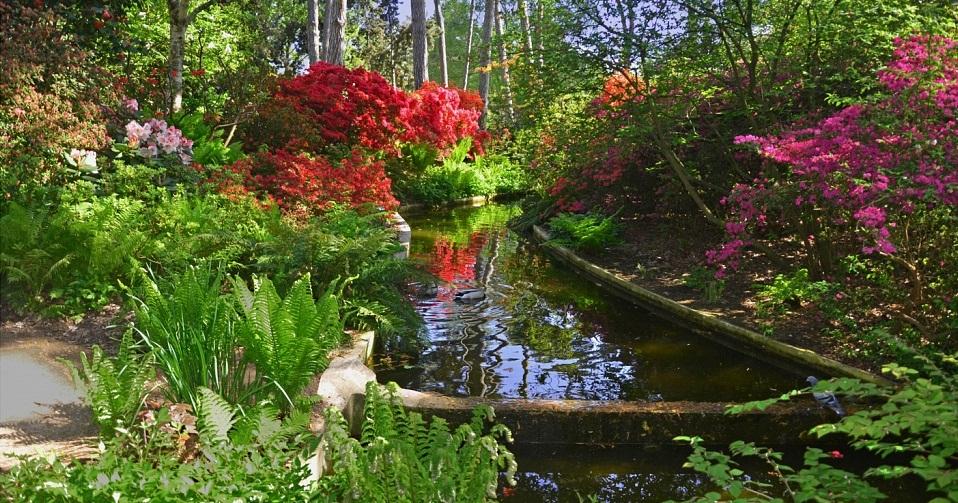 Les Azalée et Rhododendrons