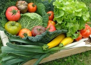 Des légumes même en hiver, conseils pratiques