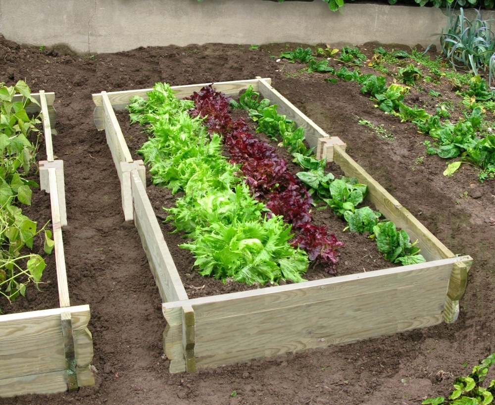 Faire son jardin potager for Creer son jardin