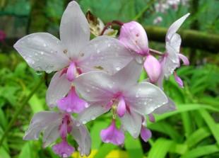 Planter des orchidées