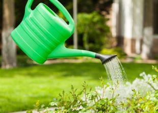 Conseils pour avoir un beau jardin for Savoir composer un beau jardin